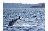 příště ho stihnu celého !, téma: 2014 Život pod mořem, v moři, na moři, nad mořem, 2.místo