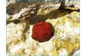 Malé červené, téma: 2014 Život pod mořem, v moři, na moři, nad mořem, 1.místo